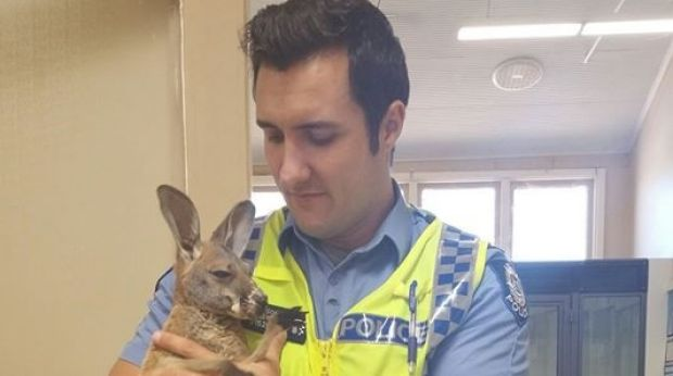 'Massive' Eagle Snatched Officer's Adopted Kangaroo – So He Snatched It Back